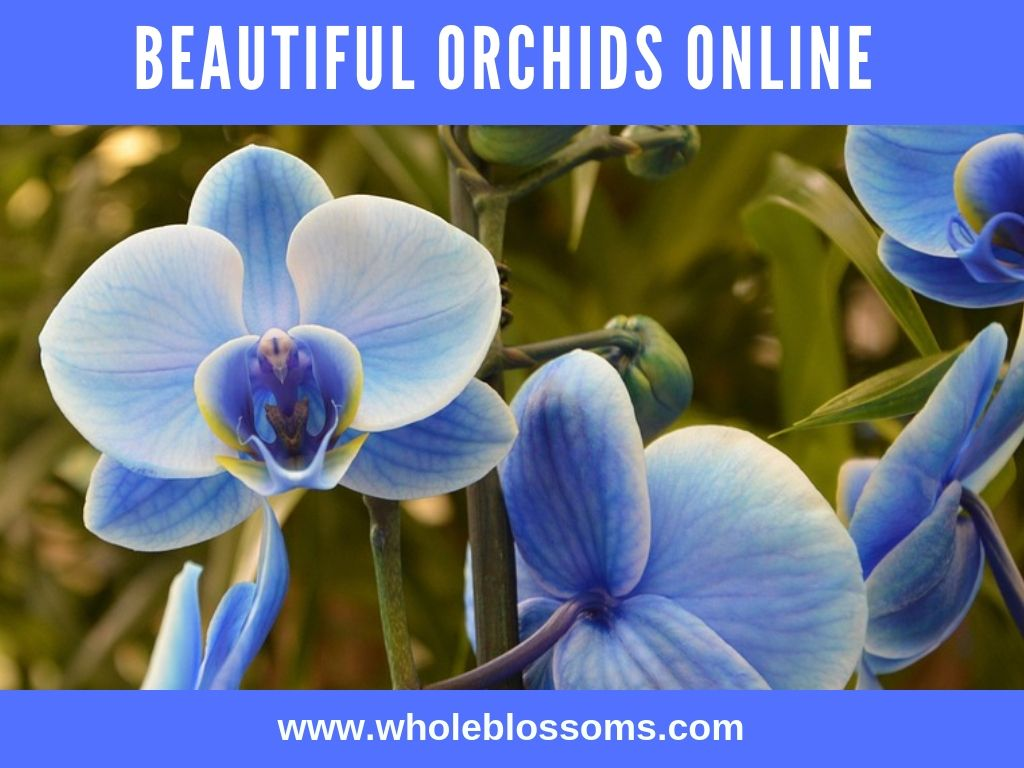 Beautiful Orchids Online To Make Your Wedding Perfect Orchids Online Orchid Flower Beautiful Orchids