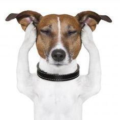 Remedios caseros para la otitis en perros