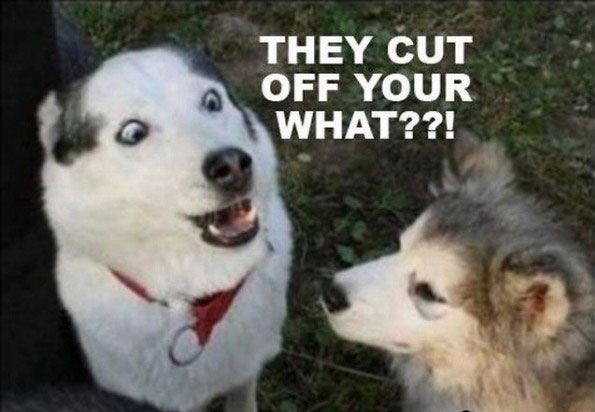 Remember To Have Your Pets Spayed Or Neutered Funny Animals Funny Animal Pictures Funny Animal Photos