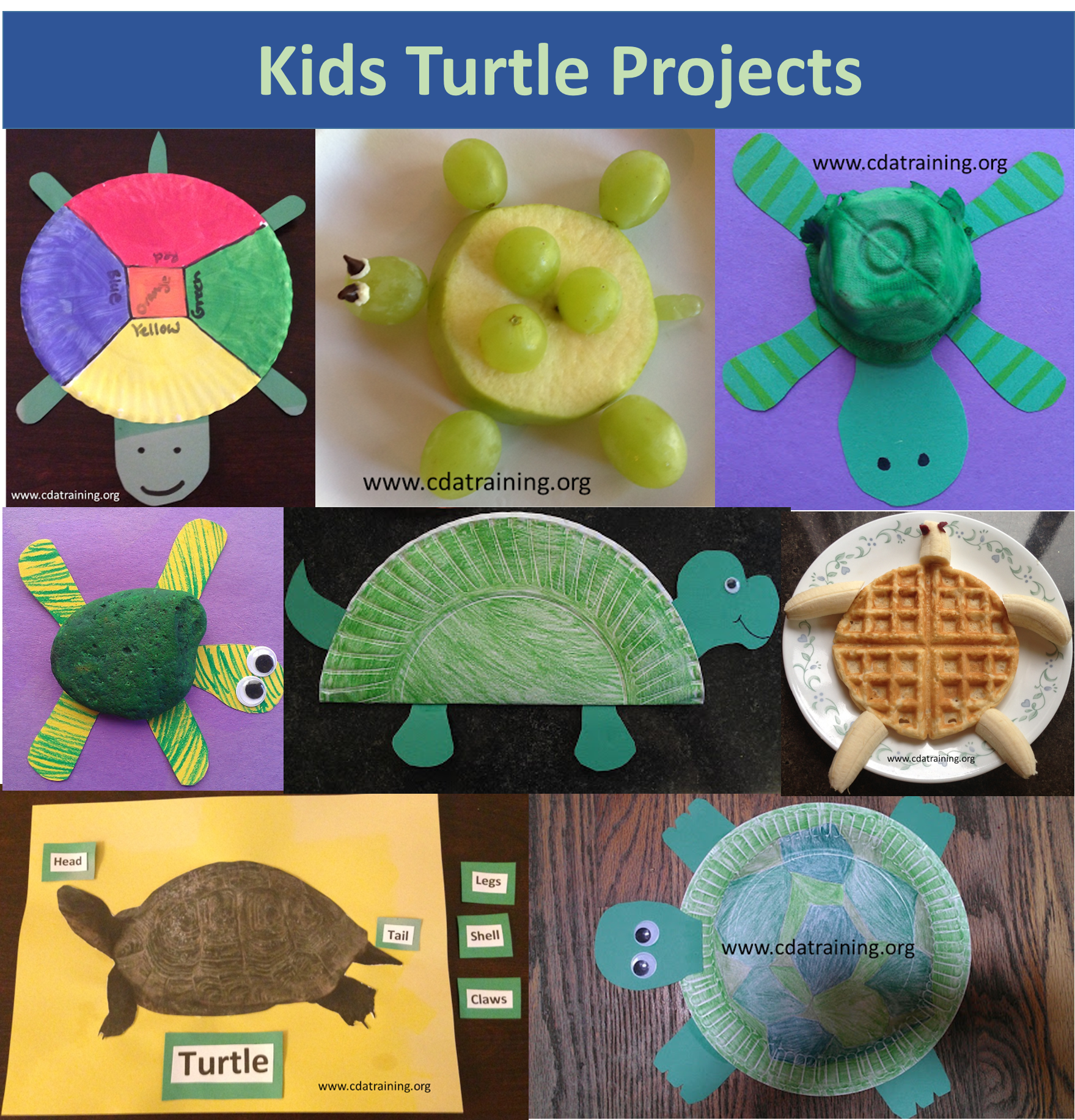 Kids Turtle Projects