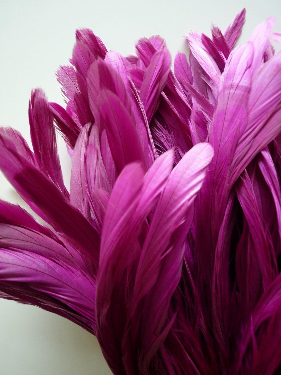 Power Pink Feathers #colorsoftheweek