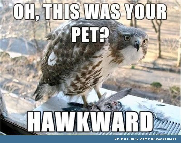 Funny Meme Picture Captions : Funny animal memes animal meme hawk bird funny pics pictures pic