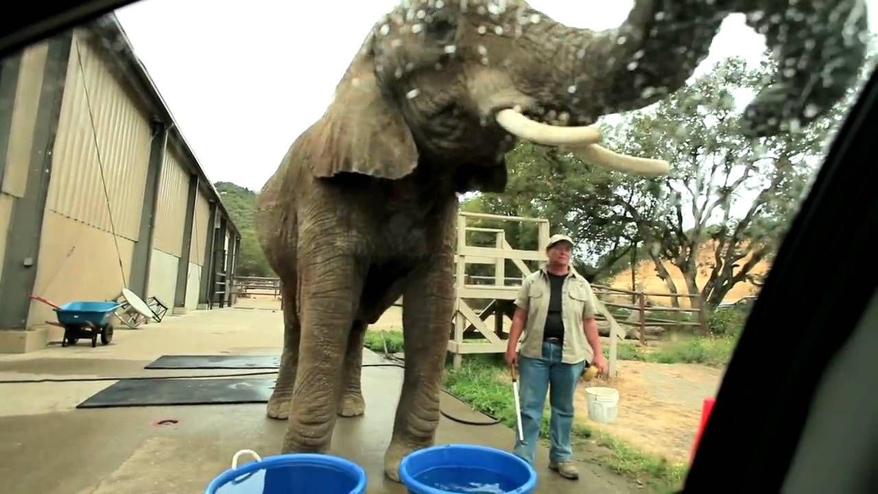 Wildlife Safari in Oregon is Using Elephants to Give Car