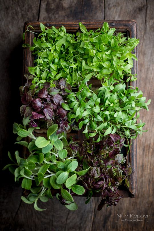 Assorted Cress by Nitin Kapoor
