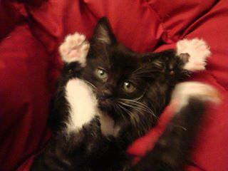 Reginald Paw Salute Kittens Cutest Cute Animals Beautiful Cats