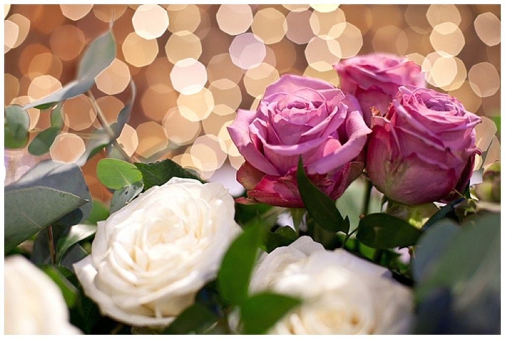 71 Beautiful Flowers And Roses By Mary Elena Ideas Beautiful Flowers Flowers Beautiful
