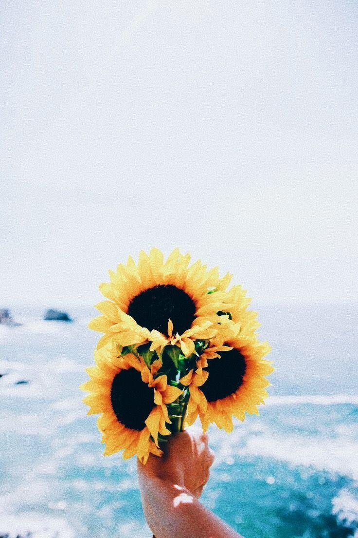 Thts Wht I Like Sunflower Wallpaper Sunflower Wall Art Sunflowers Tumblr