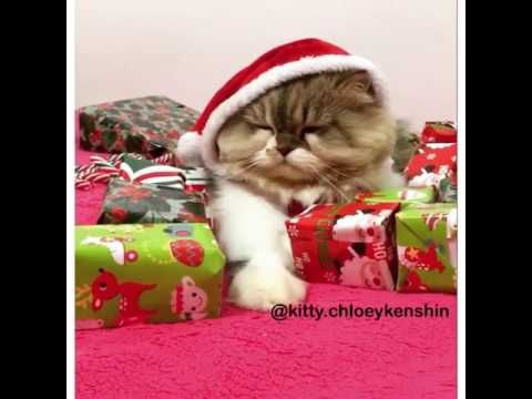 Santa Kitty Wont Share Gifts Youtube Cute Cat Gif Kittens Cute Cats