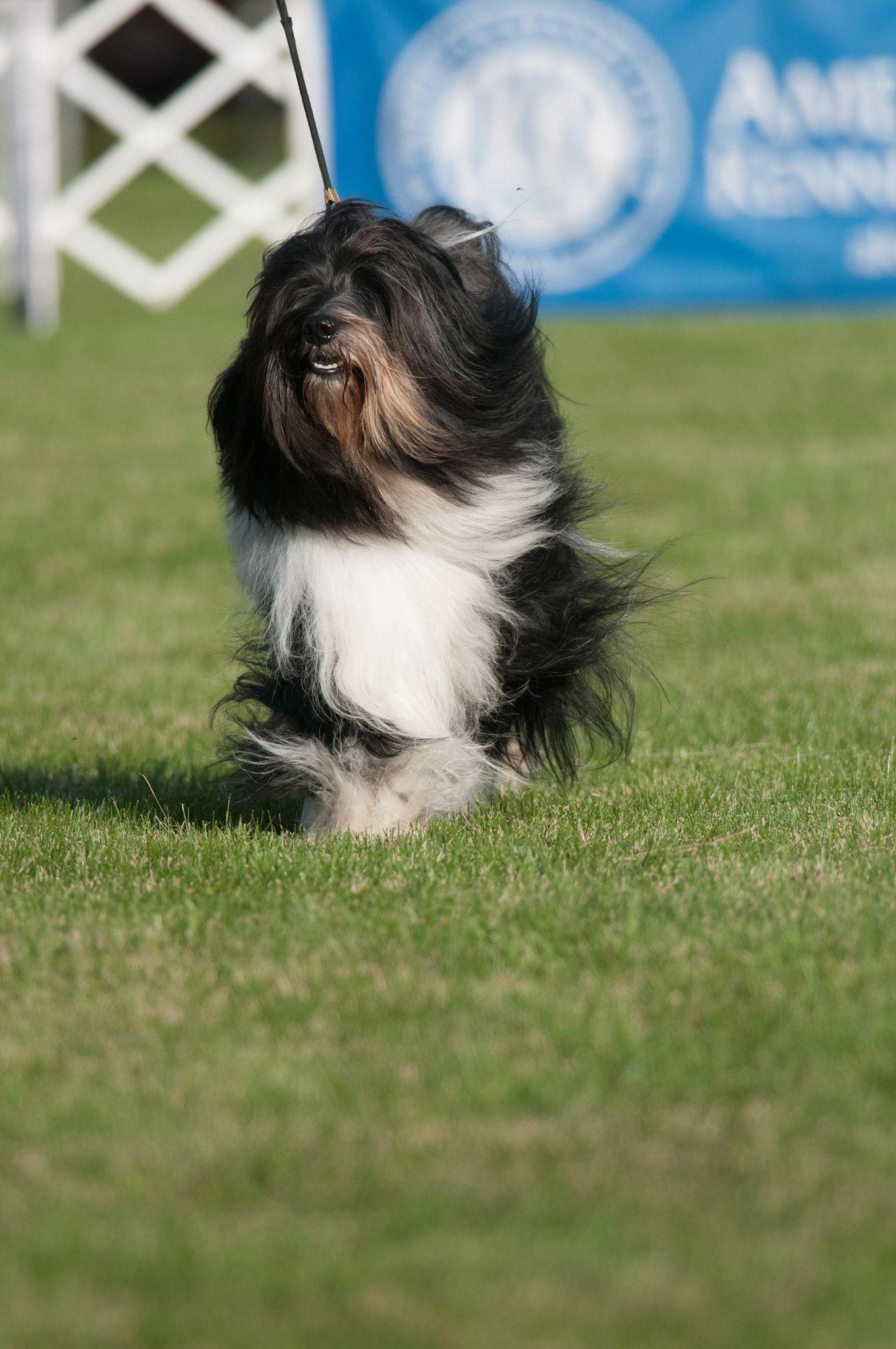 Pin On Dog Photography