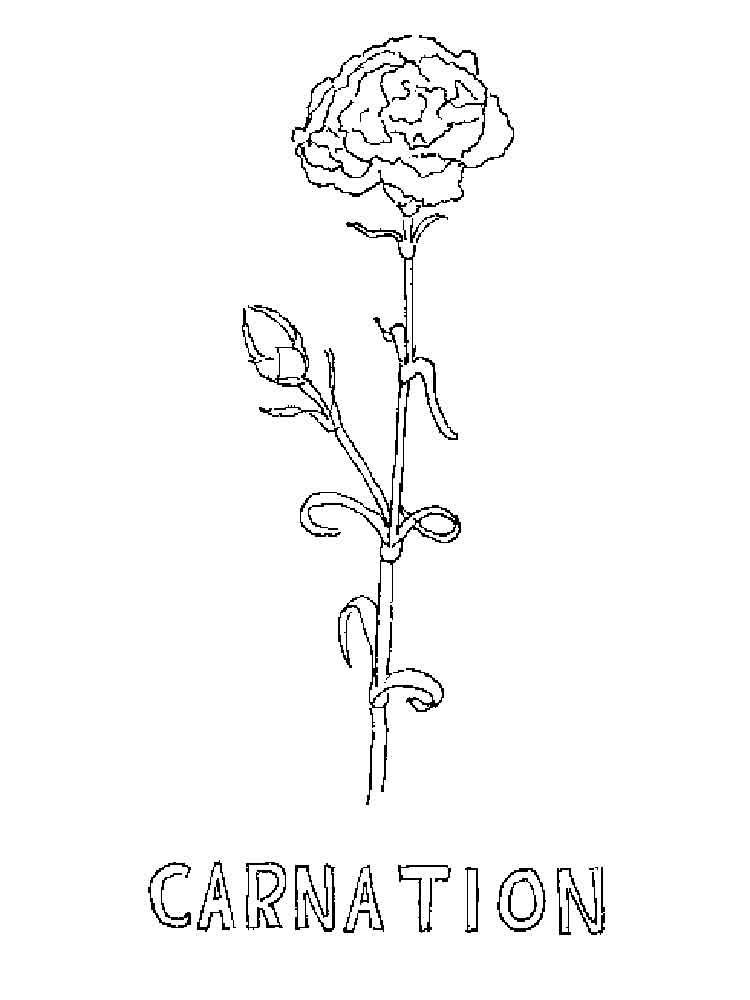 carnation coloring page.html