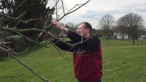 Obstbaumschnitt Der Richtige Zeitpunkt Zum Apfelbaum Und Kirschbaum