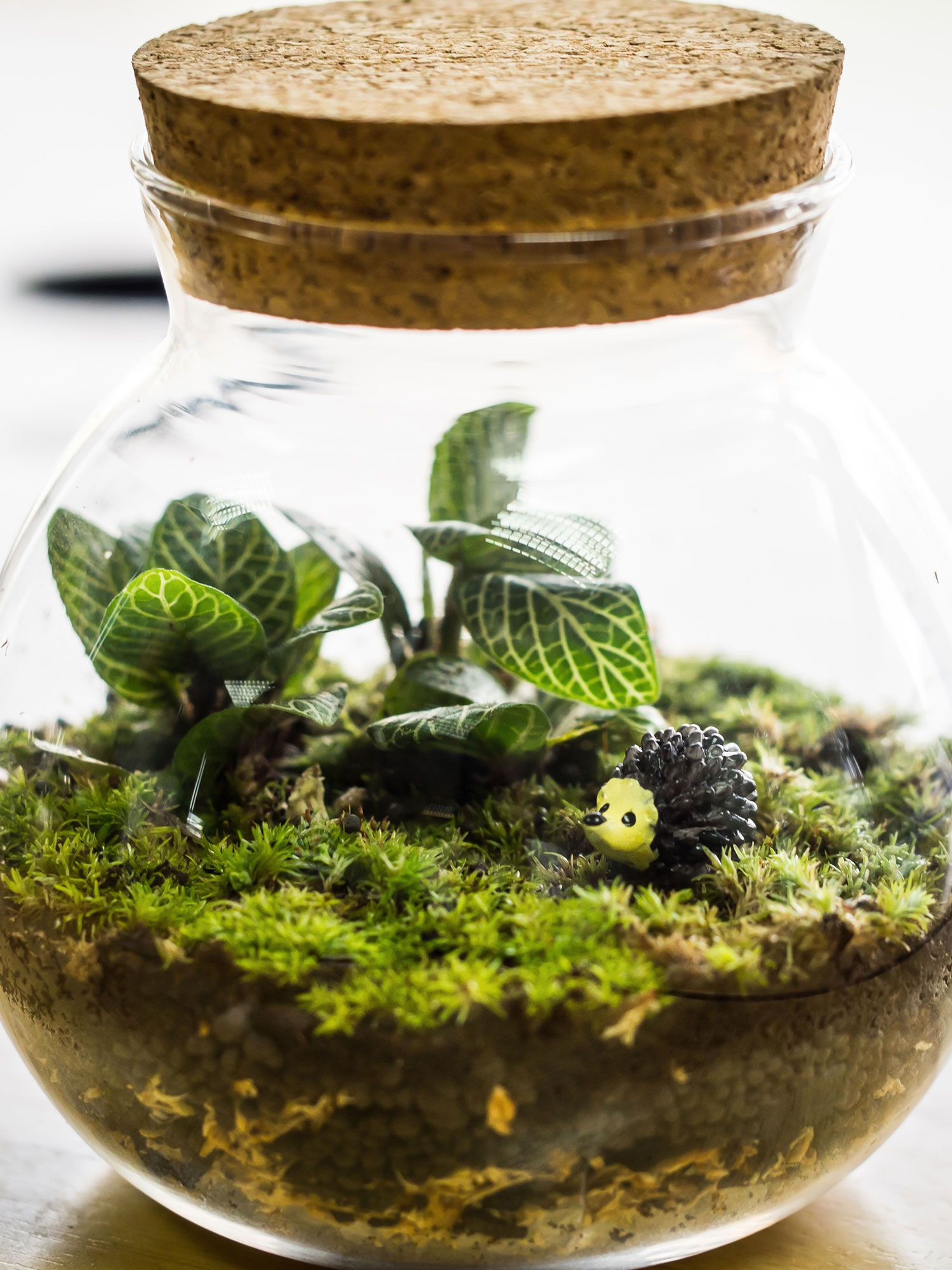 How To Make A Self Sustaining Terrarium Terrarium Rasteniya Mini