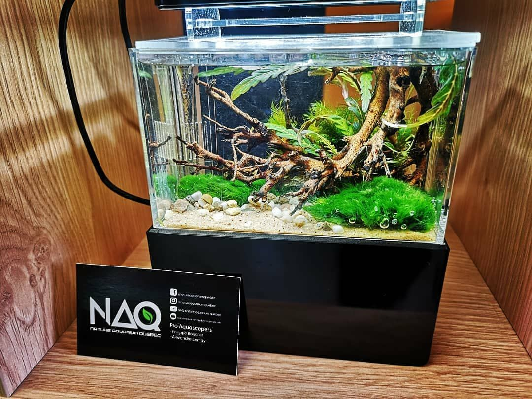 Reposted From Alex Scaper My New Minicompletetank Space Is No More An Excuse Meet The Worl Nature Aquarium Aquascape