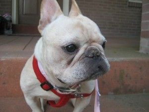 Adopt Maddie On Adopt Me Dogs Pinterest Dogs Animals And