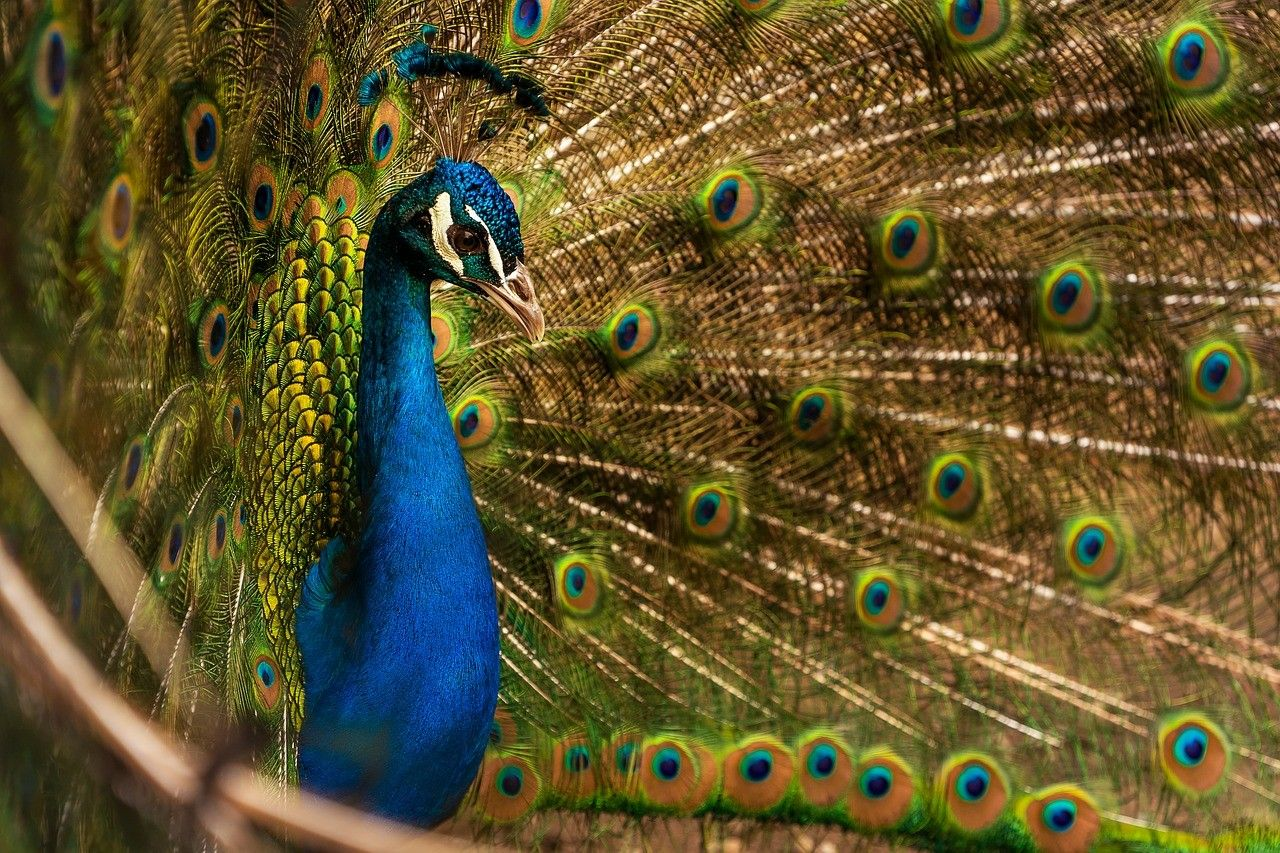 Beautiful Peacock Laptop Wallpaper Hd Hd Wallpapers For Laptop Laptop Wallpaper Wallpaper Free Download