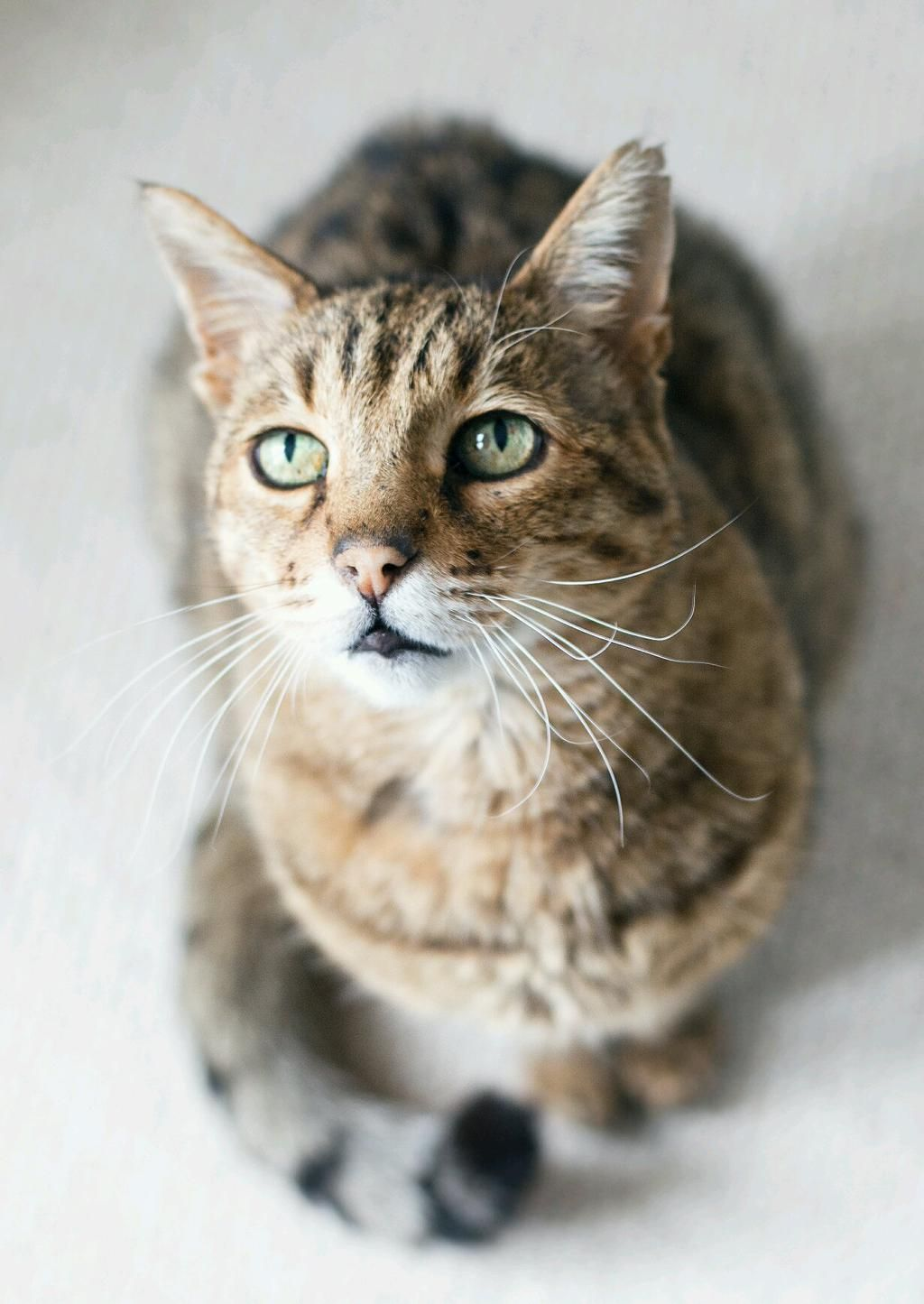 Photos And Videos By Abi Dare These4wallsblog Cats And Kittens Beautiful Cats Tabby Cat