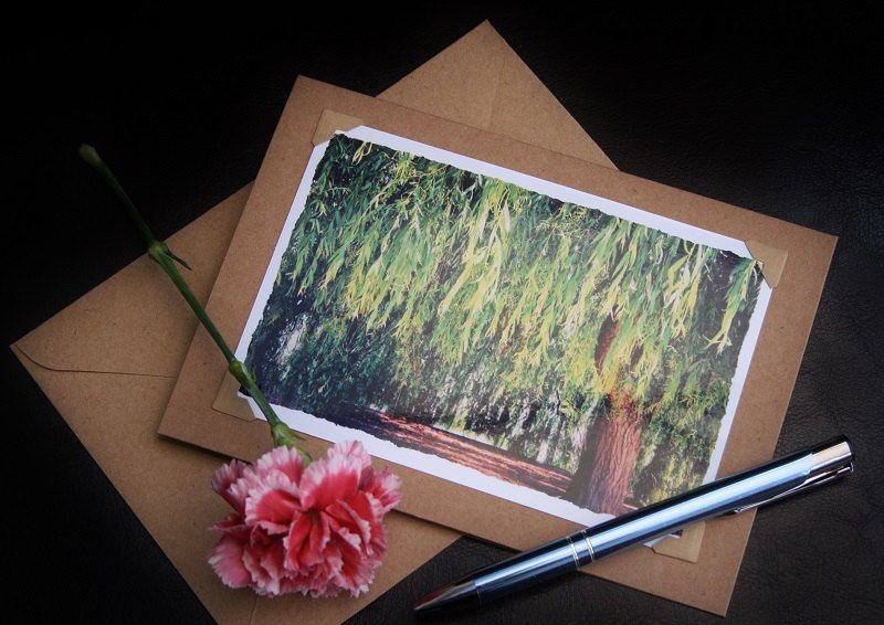 Handmade card photo note cards weeping willow tree print photo handmade card photo note cards weeping willow tree print photo greeting cards m4hsunfo