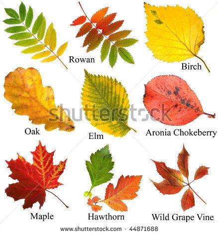 types of leaves and their names curious to know what type of leaf