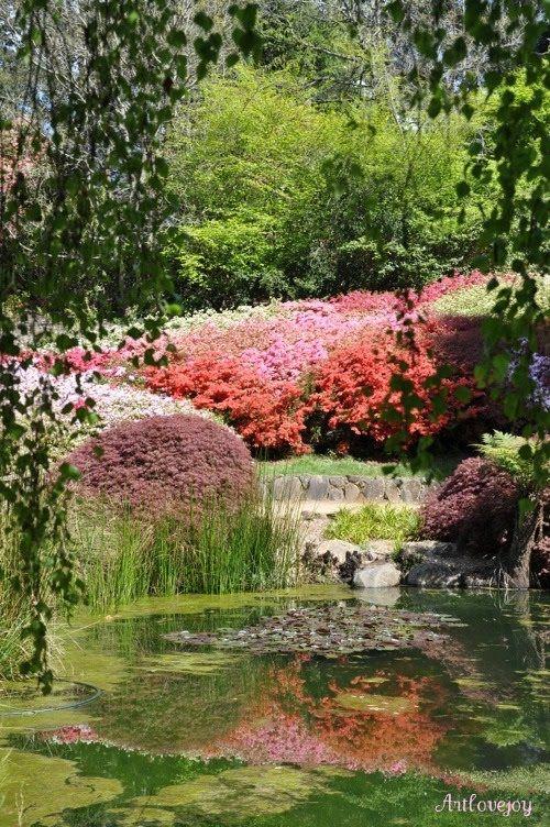 Art, Love & Joy: Rhododendron Gardens | Garden | Pinterest | Gardens ...