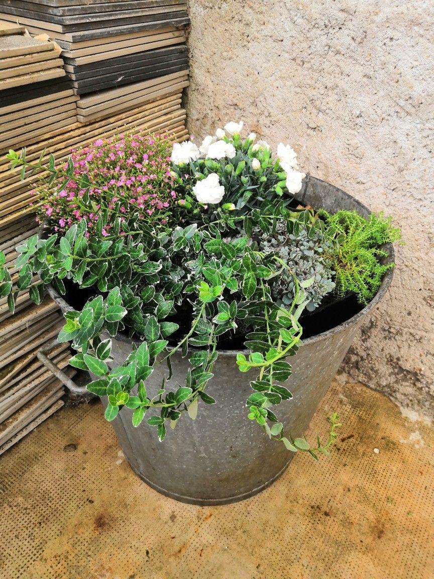Une ancienne lessiveuse transformée en jardinière  Jardin anglais