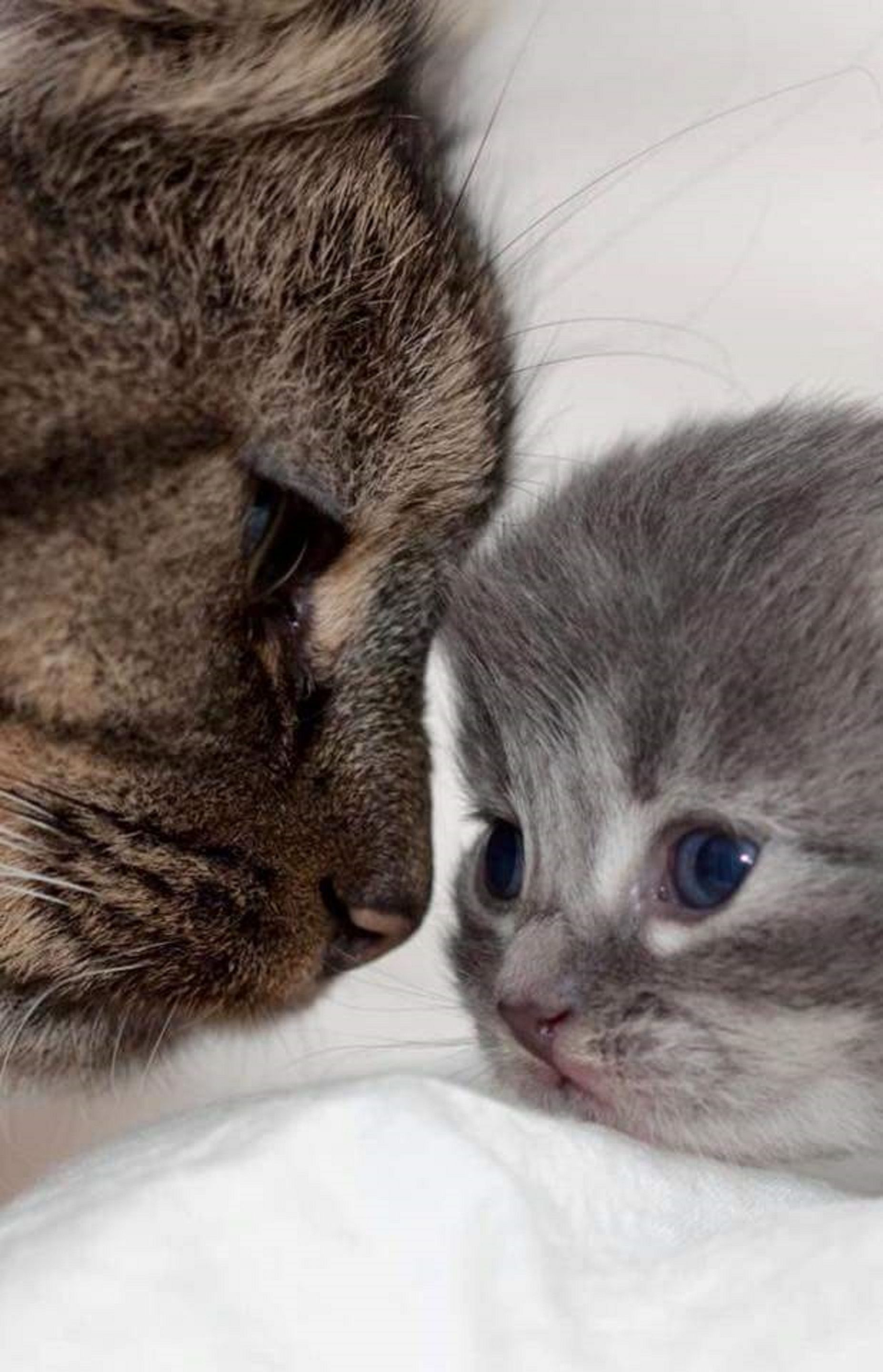 Mama Cat With Baby Kitten Baby Animals Funny Kittens Cutest Baby Animals