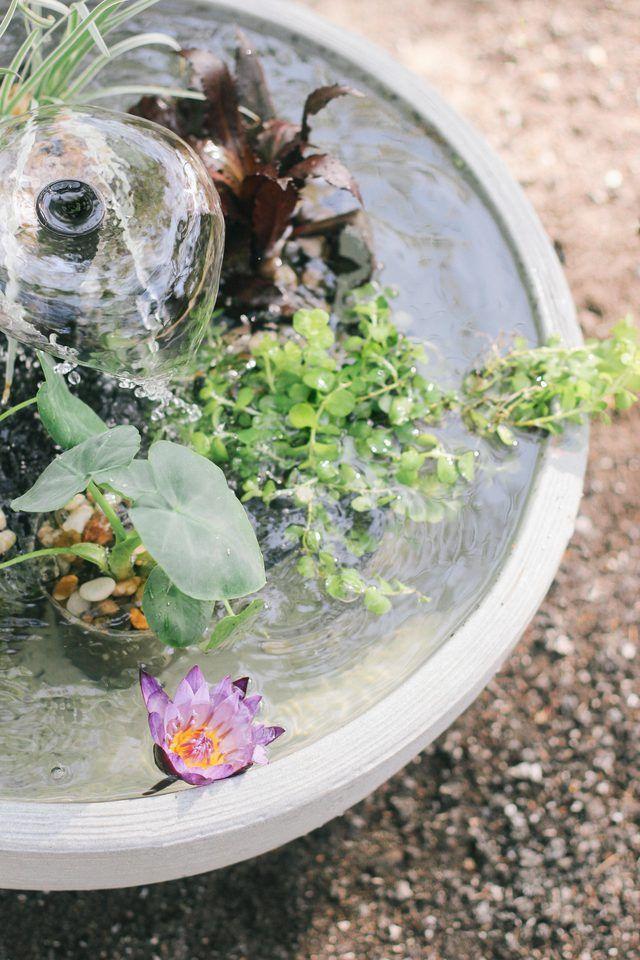 Balkon Ideen Selber Machen: Ein Mini Teich Im Topf | Pond, Garden Projects  And Gardens