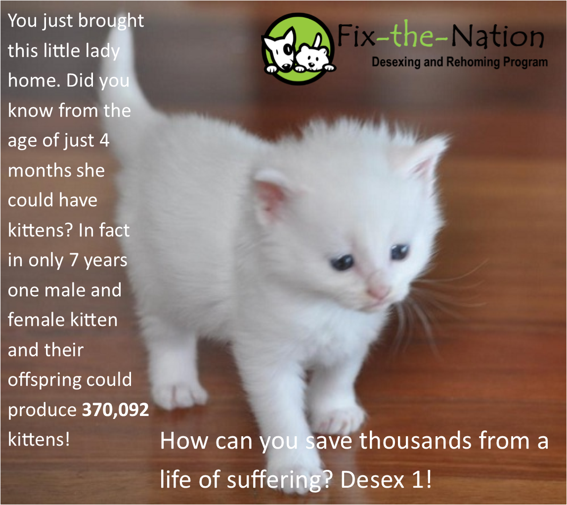 Pin By Fix The Nation Desexing And Re On Pet Desexing Rehoming Kittens Kitten
