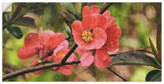 Artland Wandfolie, Premium Wandfolie »Christine Nöhmeier: Quittenblüte« online kaufen | OTTO
