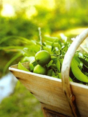 Fresh limes.