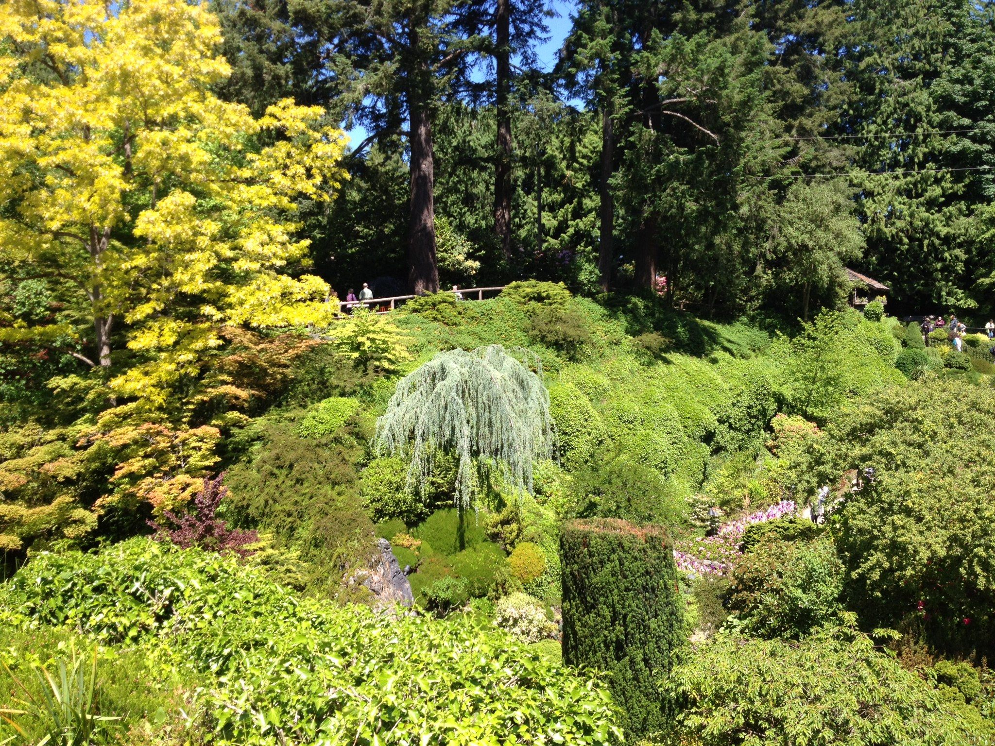 Gardening, Garden, Yard Landscaping, Urban Homesteading, Horticulture