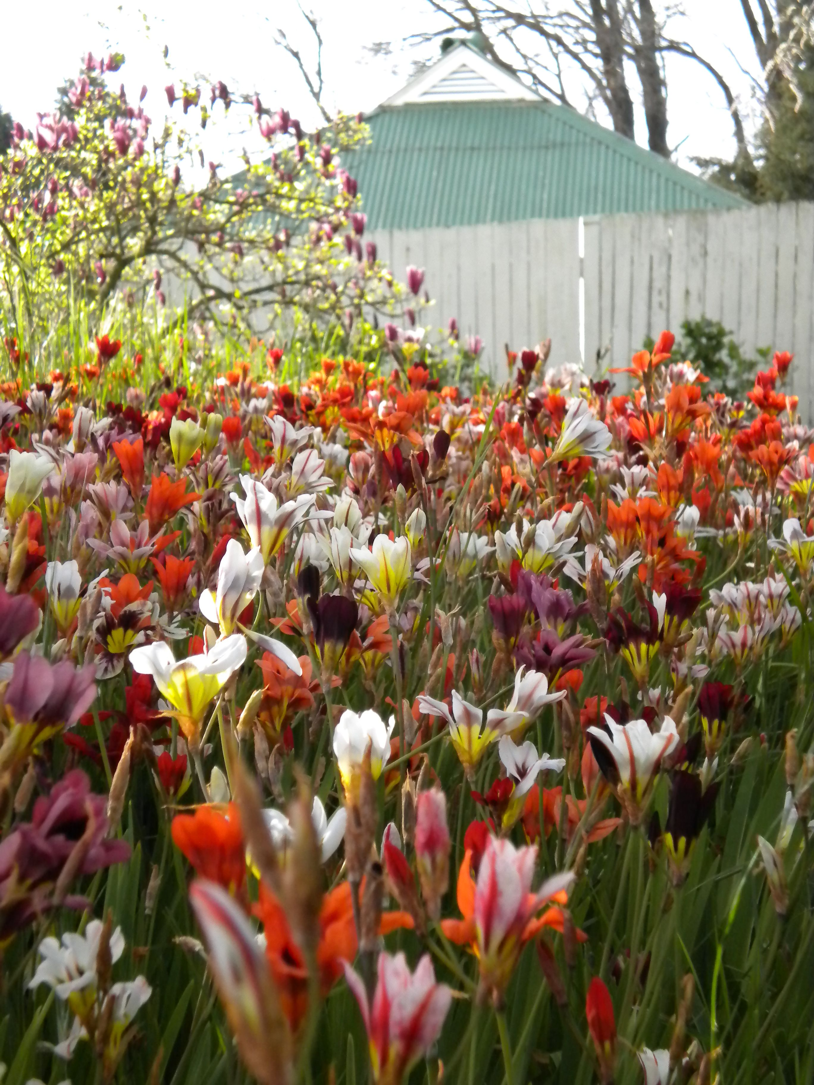 Saumarez Homestead Armidale Nsw National Trust Of Australia Beautiful Gardens Homesteading Garden
