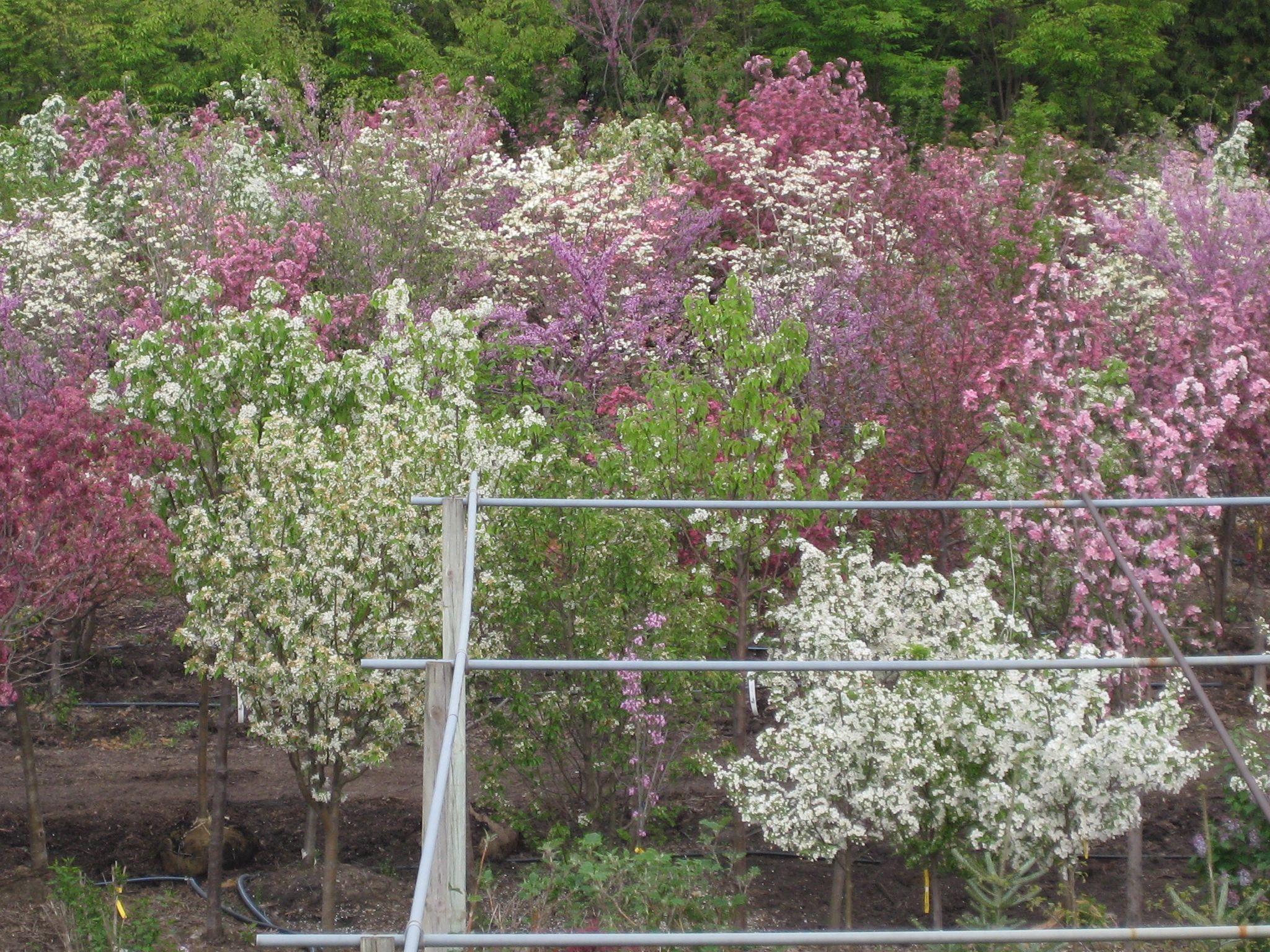 Danchris in Bloom, Spring Trees  Garden center, Ikea garden