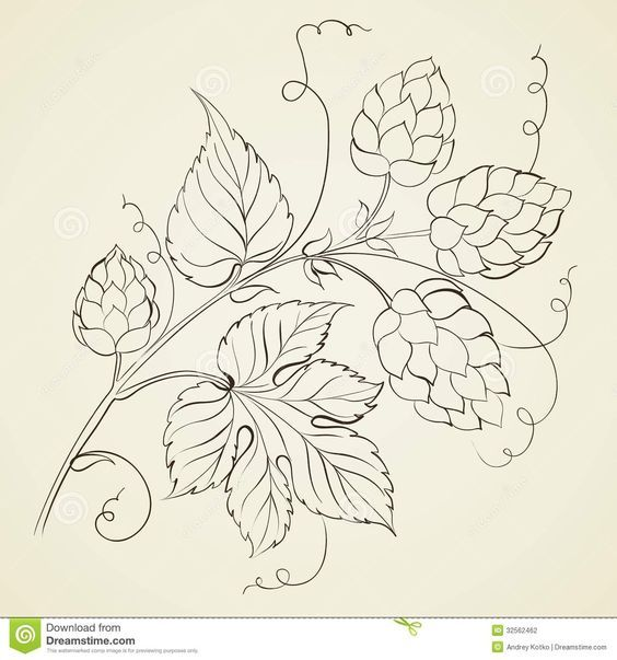 botanical drawing apples hops - Google Search | bordado a mano ...