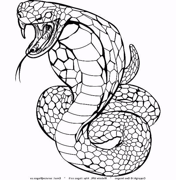 27 Great Photo Of Snake Coloring Page Free Coloring Pages