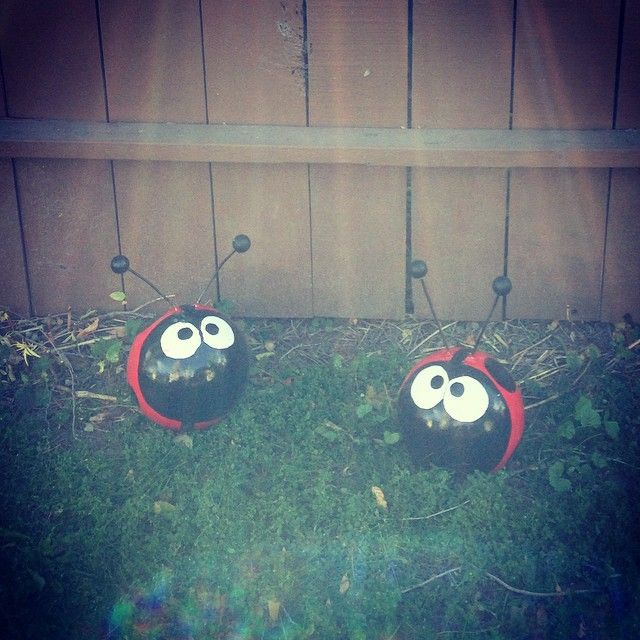 Lady bugs bowling balls