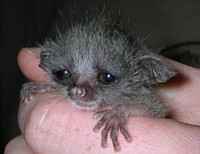 Young Bush Baby South African Names Baby Baby Coming