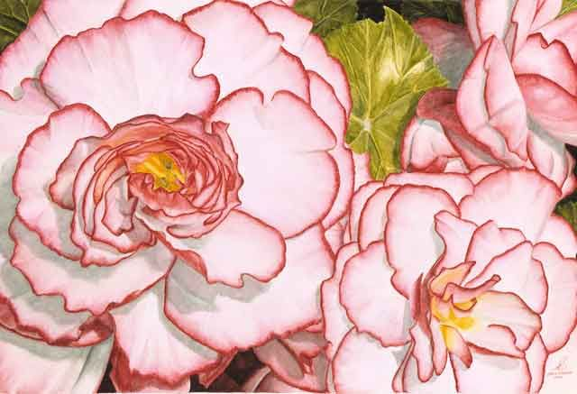 Pretty Kind Of Begonias Flower Art Color Pencil Art Color