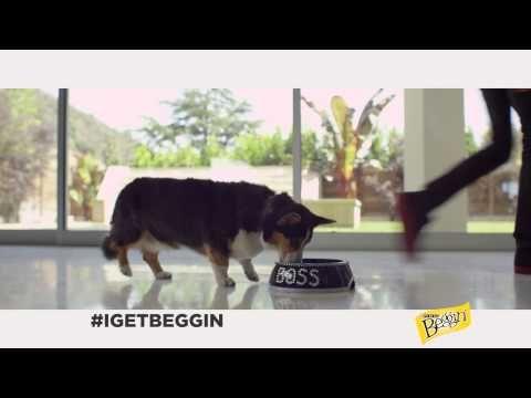 Beggin Commercial