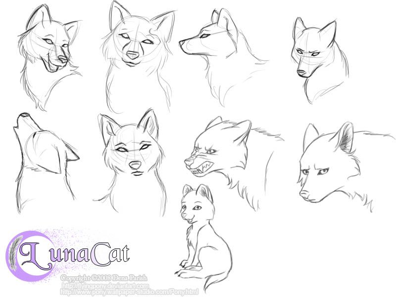 Practice Wolf Heads By Flyingpony Animal Drawings Drawings Anime Wolf