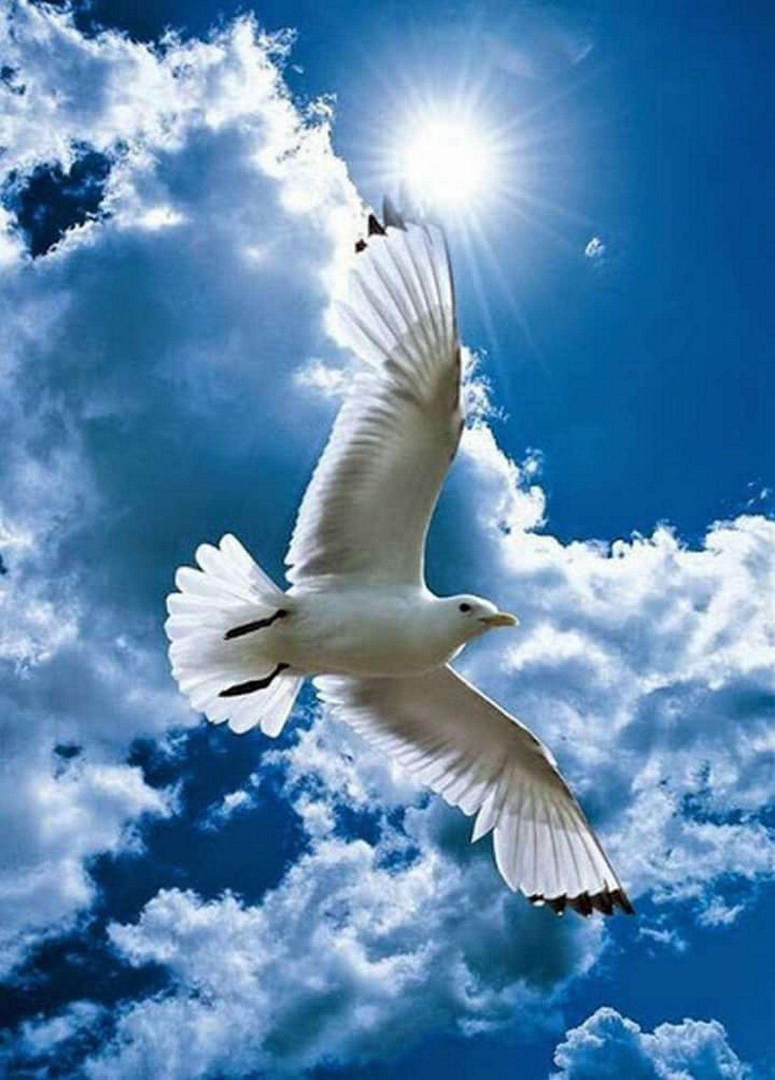 Pin De Manuel Heredia Fernandez En Corazon Aves Volando Fotos