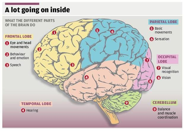 The Big Question: What do we know about the human brain ...
