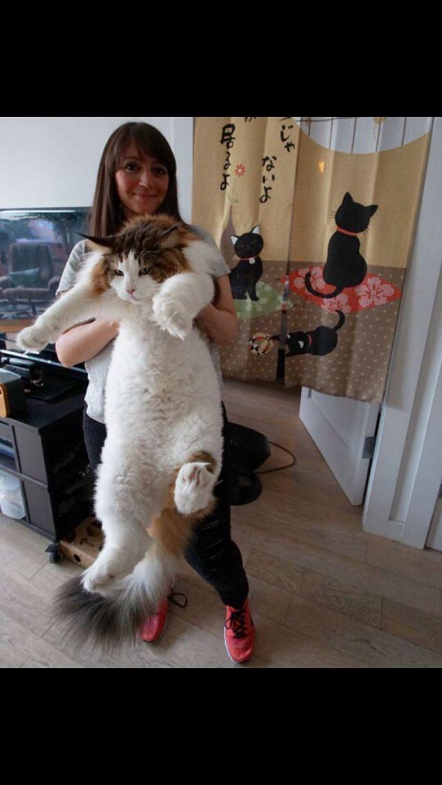 Big kitty'