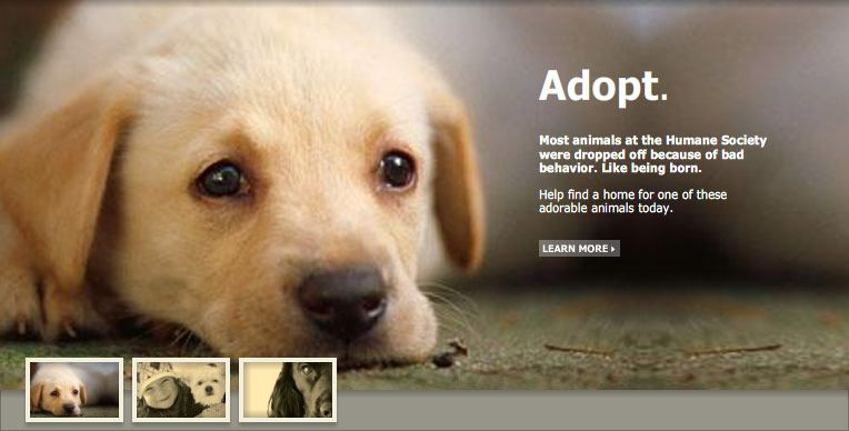 Pet Adoption Promote Awareness Pinterest Pet Adoption
