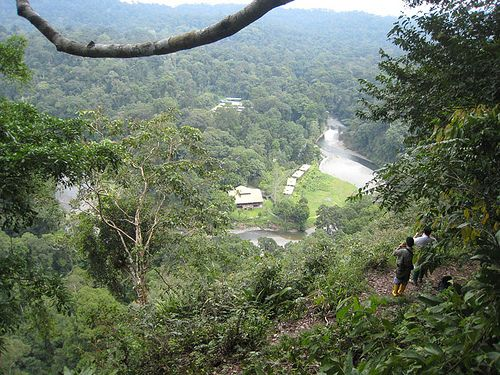 Borneo Rainforest | borneo rainforest lodge