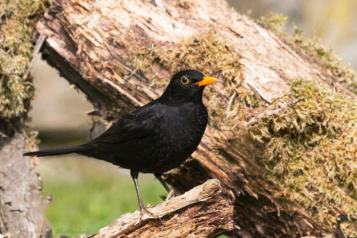 De Vogelkijker Birds Animals