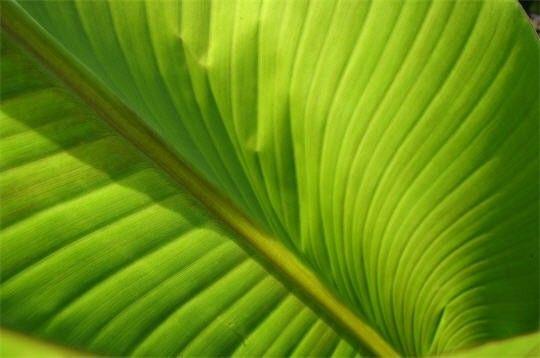 Image du Blog iris-bleu.centerblog.net