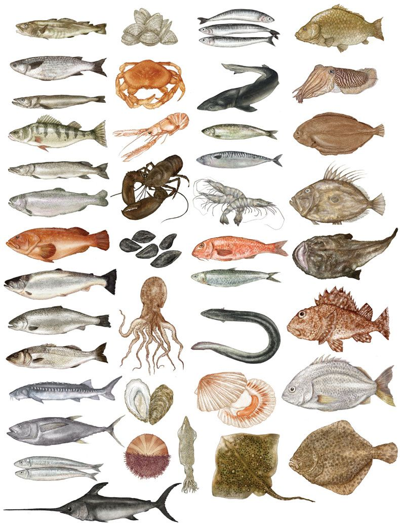 Pin By So Ri Lee On Animals Fish Illustration Animal Illustration Fish Art