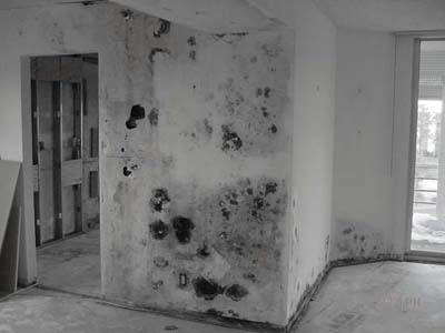 We Ve All Seen The Pictures Of Houses With Toxic Mold That Black Fuzzy Stuff Peppering The Walls Of Houses After Mold Inspection Mold Remover Cleaning Mold