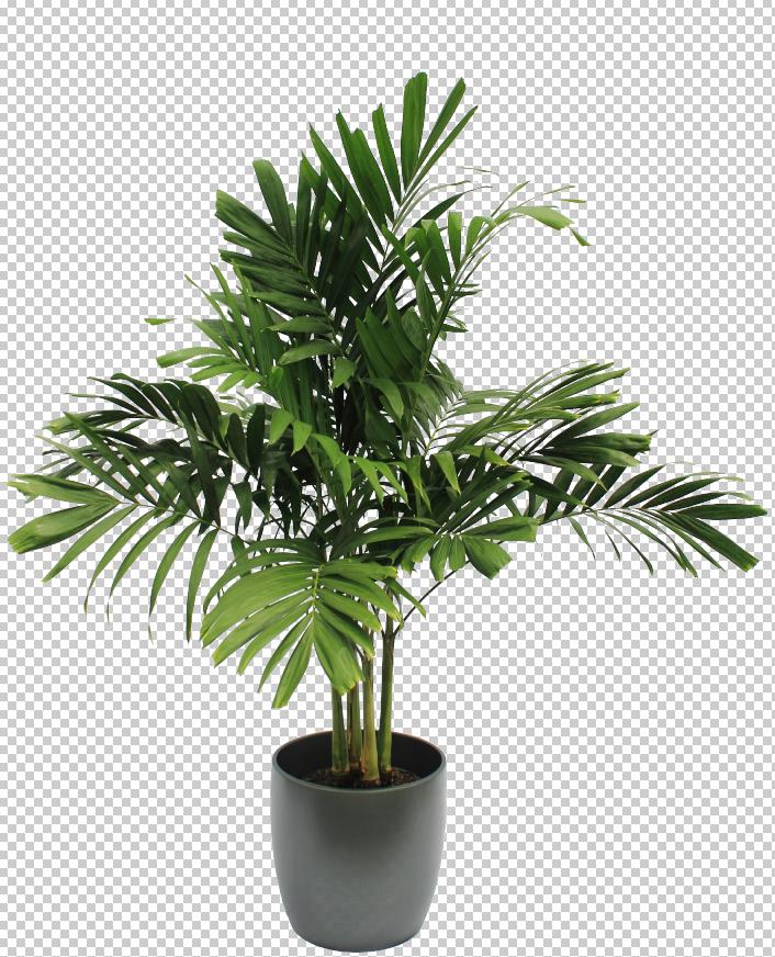 Pin By Chrissy Morehu On Plant Graphics Pflanzen Baum