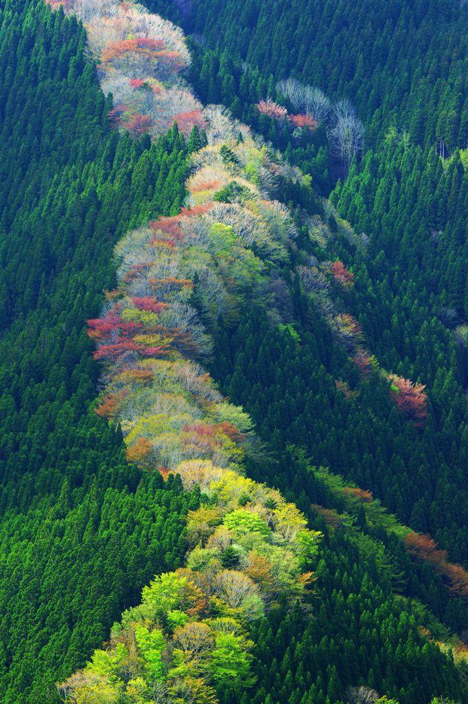 Spring in Namego Valley, Tenkawa Mountain, Nara, Japan